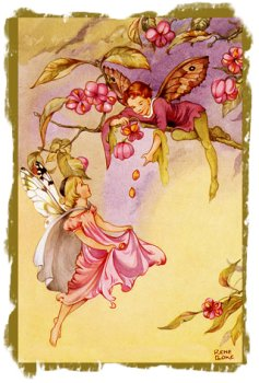 Rene Cloke - 'The Spindle Tree Fairies'