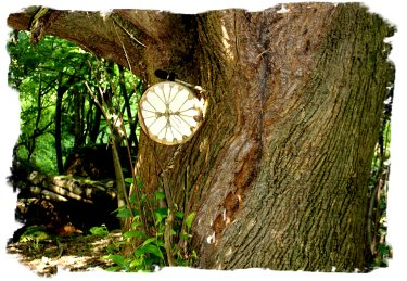 My drum in the horse chestnut tree ©vcsinden2012