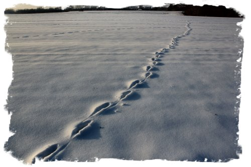 Snow footprints - unknown animal ©vcsinden2012