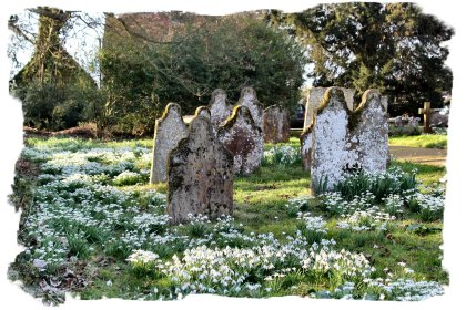Hunton Churchyard withe the snowdrops in bloom ©vcsinden2012