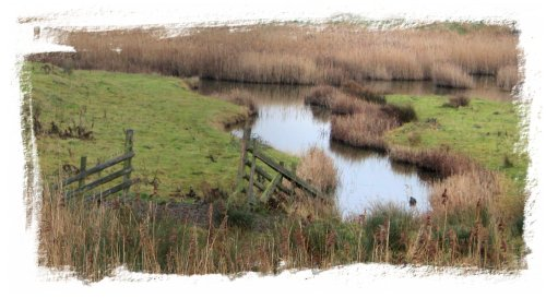 Oare Marshes - reeds and canals in January ©vcsinden2012