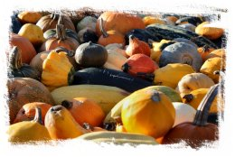 Pumpkins and squashes in variety at Slindon Festival ©vcsinden2012