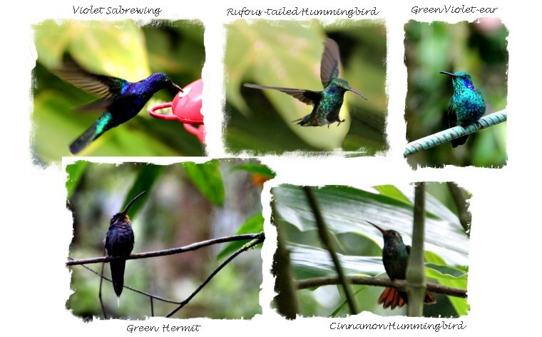 Costa Rican Hummingbirds ©vcsinden2013