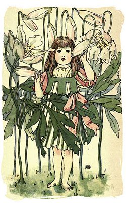 Wood Anenome Fairy from the Dumpy Books
