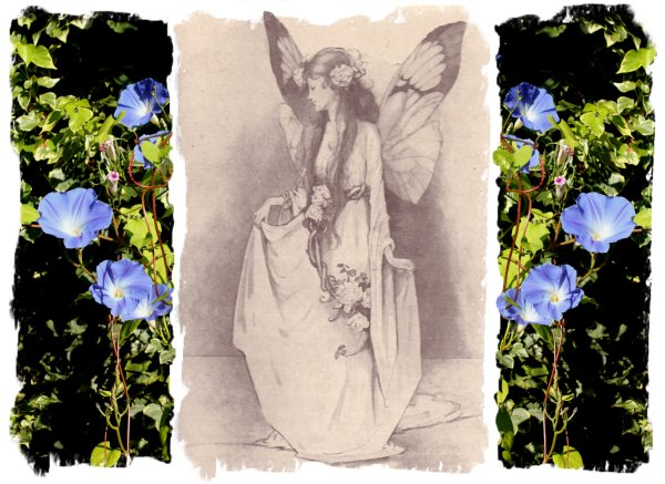 Helen Jacobs, fairy artist 1888 - 1970 with Morning Glory