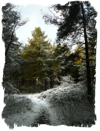 Hurst Wood, Charing - footpath to Faery Circle in winter ©vcsinden2013
