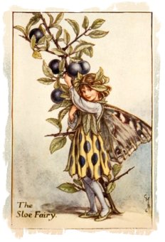 'The Sloe Fairy' by Cicely Mary Barker
