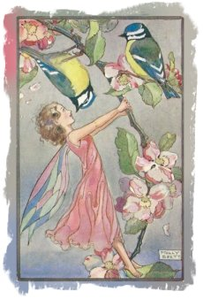 Molly Brett Postcard - Apple Blossom fairy - Medici Society