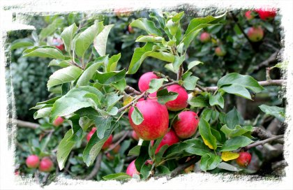 Apple is a faery garden ©vcsinden2011