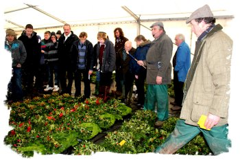 The auctioneers at work at Tenbury Mistletoe Auctions ©vcsinden2011