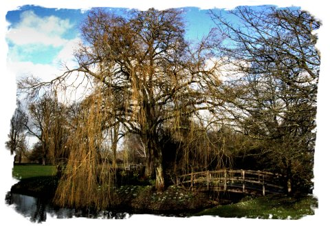 Willow in February, at Hever Castle in Kent ©vcsinden2014