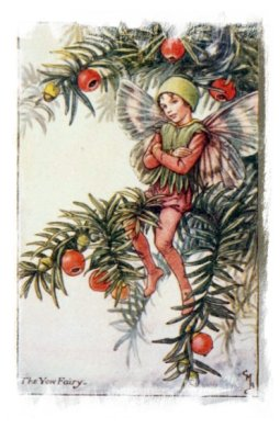 Yew Tree Fairy by Cecily Mary Baker