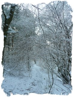 Snow in the fairy wood - the birds need looking after in this weather