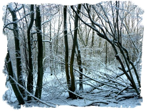 Hurst Wood, Charing in a deep snow fall