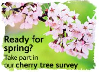 Cherry tree survey link from the Natural History Museum