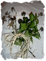 Ivy (gort), alder catkins and raffia at the edge of the tied bunch.