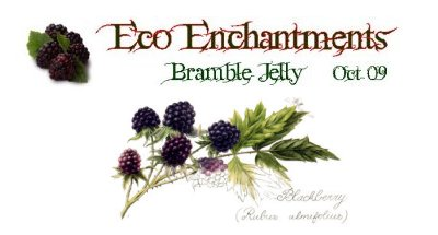 Bramble Jelly recipe at Eco Enchantments Hedgerow Cooking ©vcsinden2010