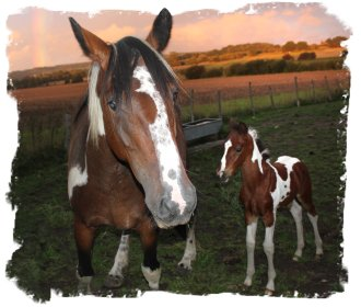 Hurst Wood, Charing - welcome foal©vcsinden2010