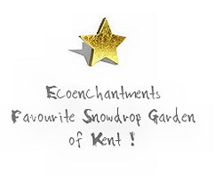 Gold Star Award for best snowdrop garden in Kent from Ecoenchantments ©vcsinden2015