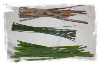Three different reed types for crafts and Brigid Crosses