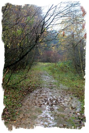 Hurst Wood, Charing - after a November downpour